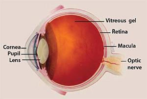 Eye Structure - Macular edema